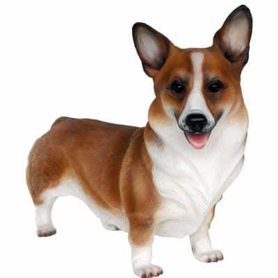 כלב קורגי