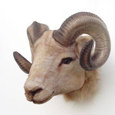ראש כבש