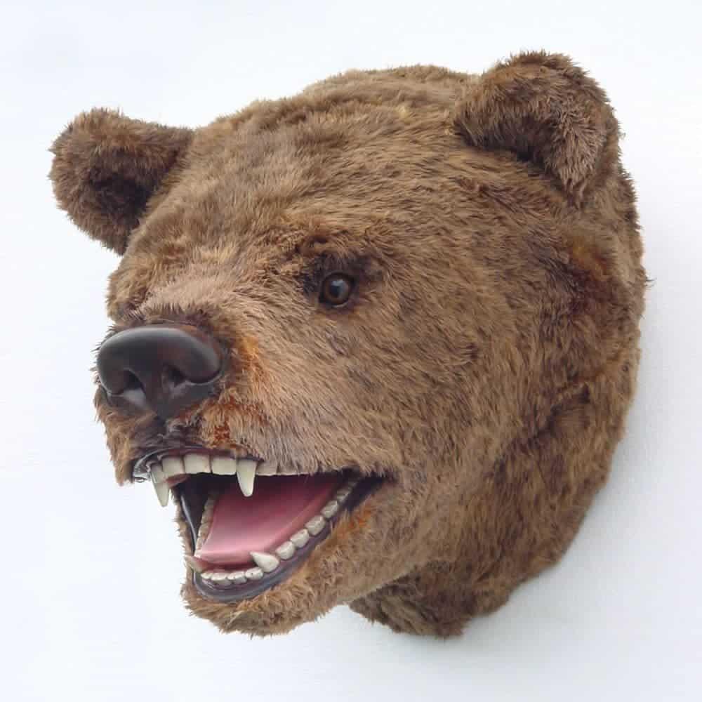 ראש דוב