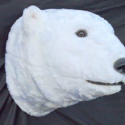 ראש דב לבן