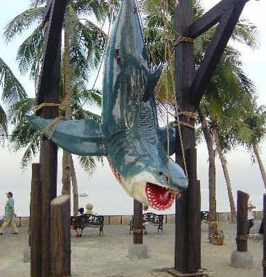 כריש תלוי ענק