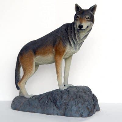 זאב על סלע