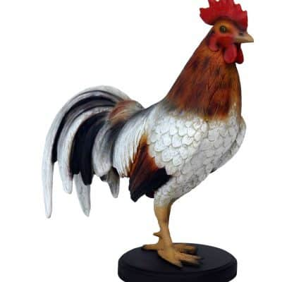 תרנגול זכר