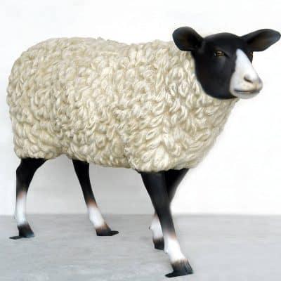 כבשה שחור לבן