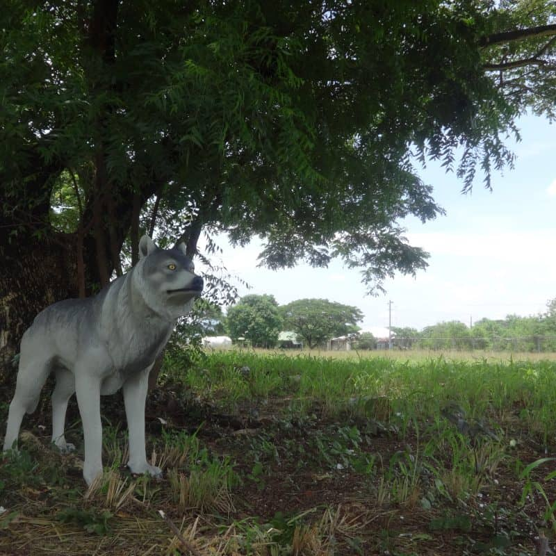 פסל של זאב