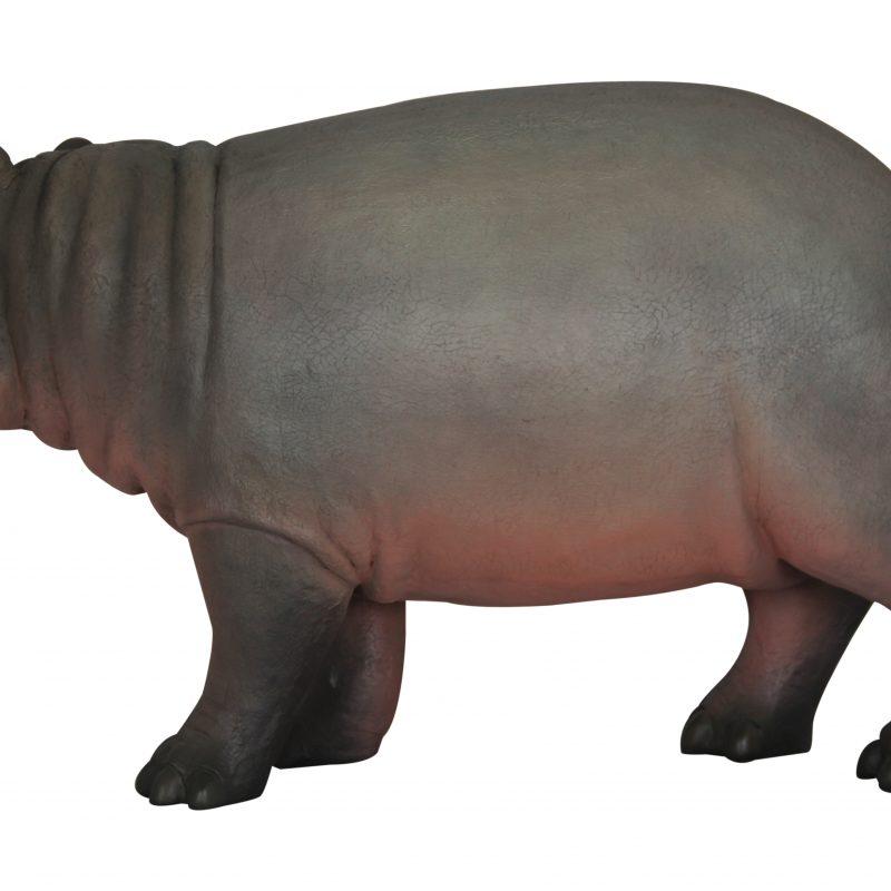 BABY HIPPO 3