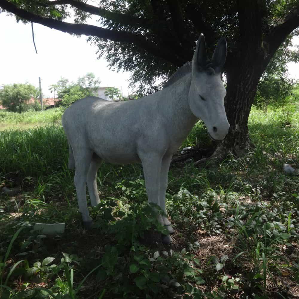 פסל של חמור לבן