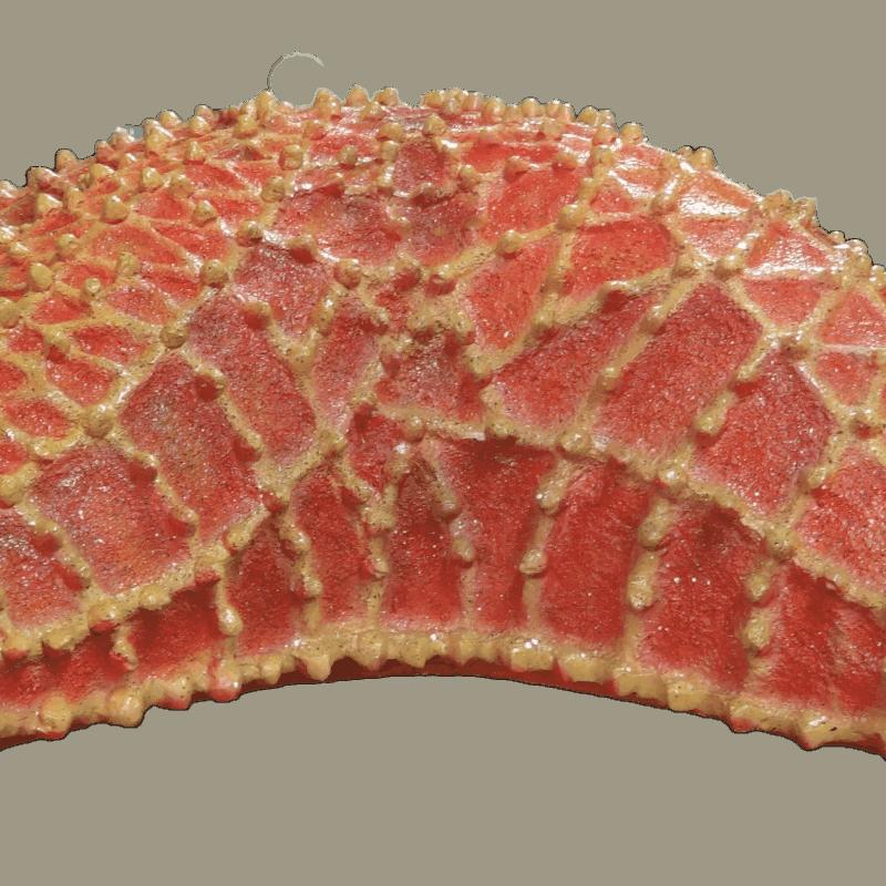 Cushion Starfish (1)