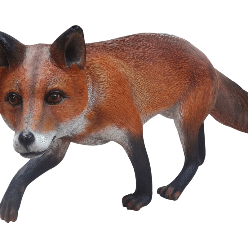Fox (1)