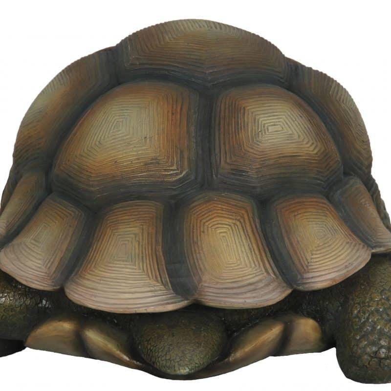 Land-turtle-4