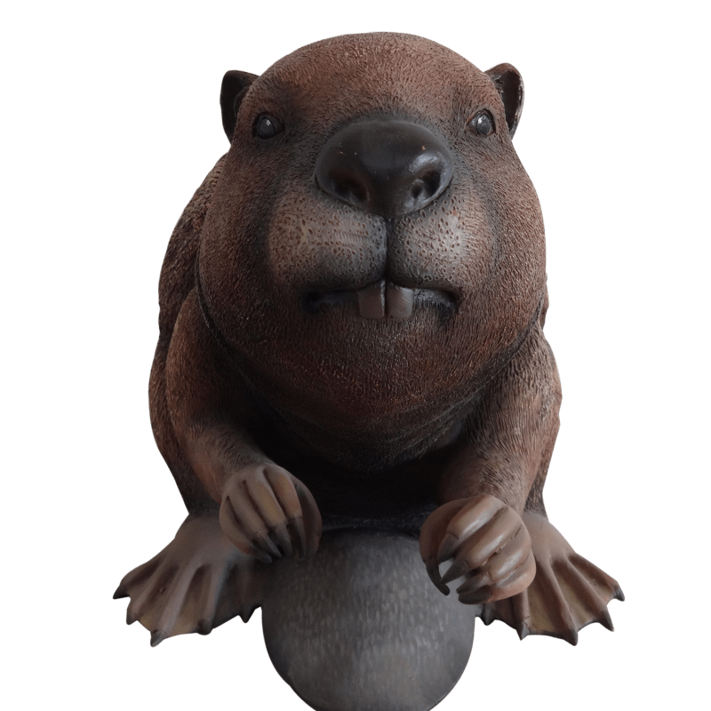 beaver_front