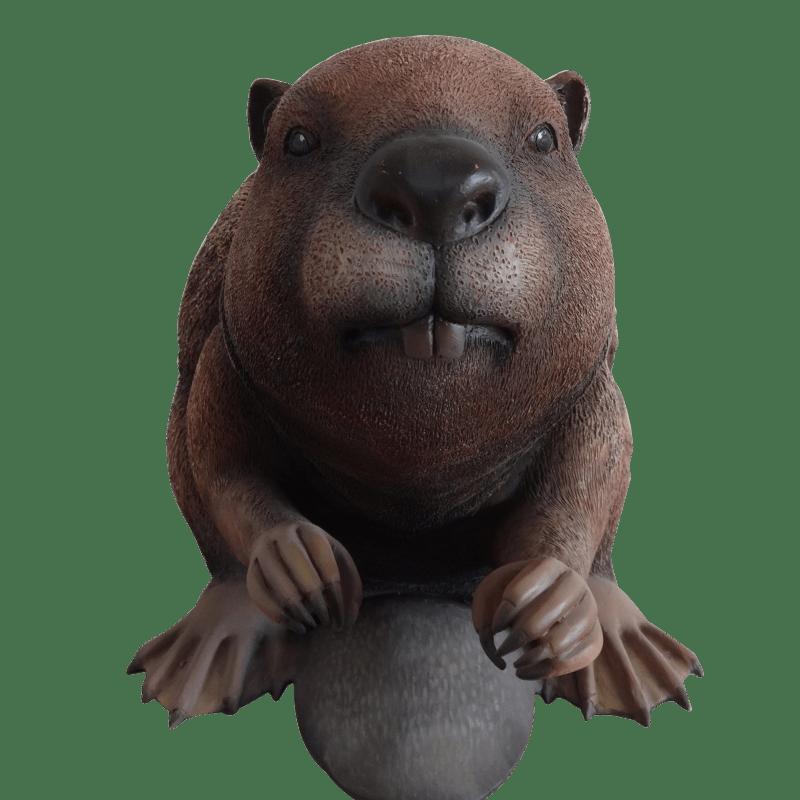 beaver_front