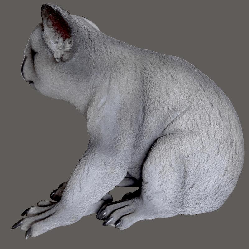koala_side